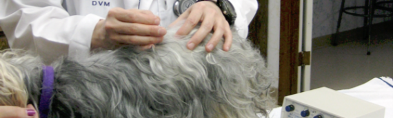 Pet Acupuncture and Herbal Medication