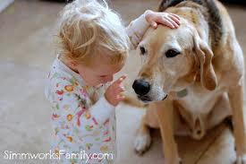 #1. Why test my dog for heartworm every year, when she is ...