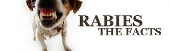 #2. Why do my pets have to be vaccinated against Rabies?