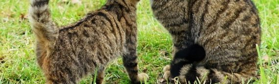 Cat Behavior From Wild Ancestors