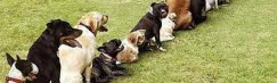 Dog Urine Damage to Yards